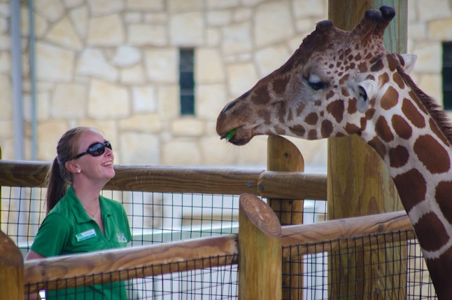 Woman in green collared shirt smiling up at a giraffe